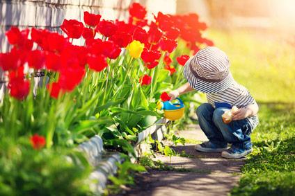 Kind gießt Tulpen